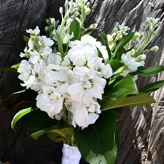 bridesmaid bouquet with white stock